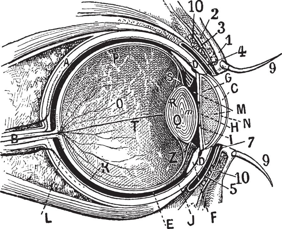 charles darwin eye