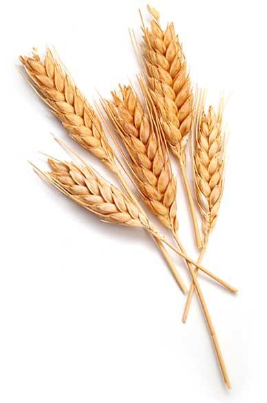 grain sabbath