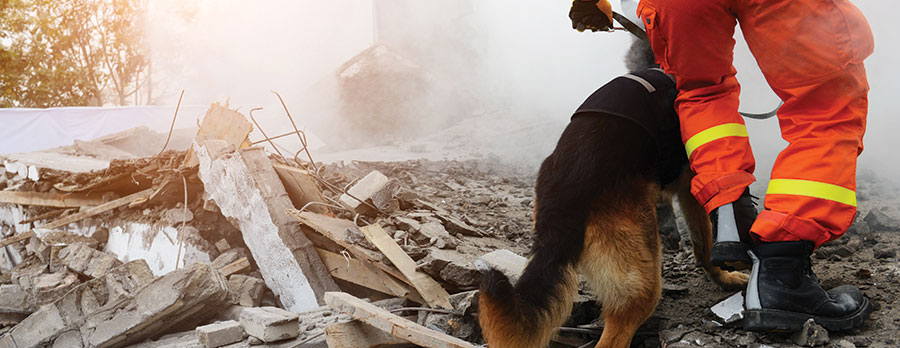 rescue dog earthquake